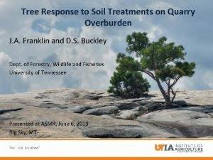 Tree Response to Soil Treatments on Quarry Overburden