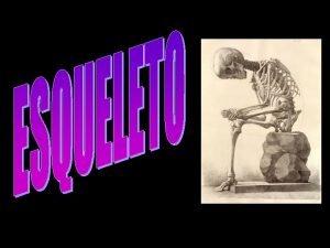 axial apendicular Sobotta Esqueleto Axial 1 Ossos do