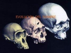 EVOLUCIN DEL HOMBRE Evolucin humana Hominizacin Proceso de
