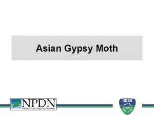 Asian Gypsy Moth Asian Gypsy Moth Why is