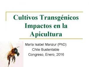 Cultivos Transgnicos Impactos en la Apicultura Mara Isabel
