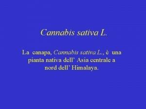 Cannabis sativa L La canapa Cannabis sativa L