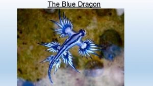 The Blue Dragon Where does The Blue Dragon