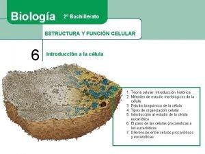 Biologa 2 Bachillerato ESTRUCTURA Y FUNCIN CELULAR 6