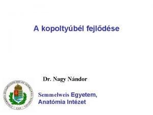 A kopoltybl fejldse Dr Nagy Nndor Semmelweis Egyetem