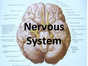Nervous System Parts of Nervous System Central Nervous