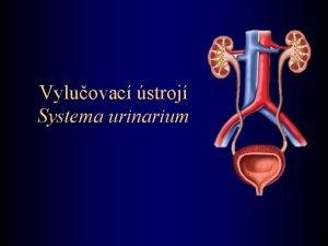 Vyluovac stroj Systema urinarium Horn vyluovac stroj Ledvina