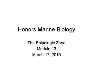 Honors Marine Biology The Epipelagic Zone Module 13