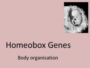 Homeobox Genes Body organisation Cell Differentiation Cell differentiation