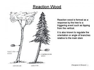 Reaction Wood Reaction wood is formed as a