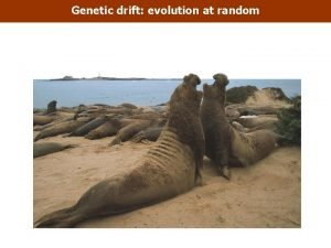 Genetic drift evolution at random Genetic drift evolution