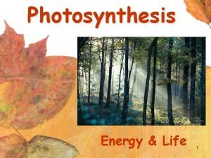 Photosynthesis Energy Life 1 Photosynthesis Plants use the