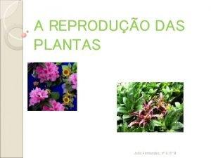 A REPRODUO DAS PLANTAS Joo Fernandes n 9