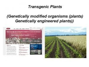 Transgenic Plants Genetically modified organisms plants Genetically engineered