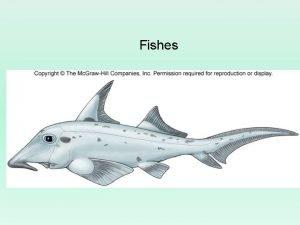 Fishes Vertebrate Evolution Oldest known vertebrate fossils Tadpole