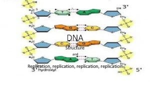 DNA Structure and Replication replication replication Building block