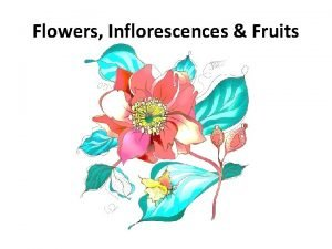 Flowers Inflorescences Fruits Flowers Inflorescence Fruits Floral characteristics