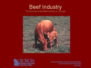 Beef Industry An Overview of the Beef Industry
