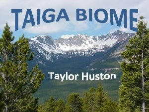 The definition of Taiga is the coniferous forests