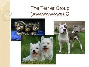The Terrier Group Awwwwwwwe History The word terrier