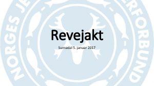 Revejakt Surnadal 5 januar 2017 Reven Lengde 45