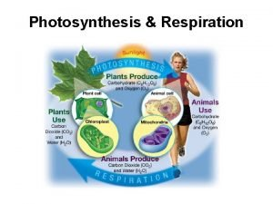 Photosynthesis Respiration Cell Energy Photosynthesis and Respiration Energy