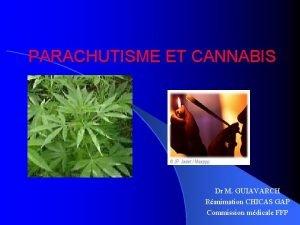 PARACHUTISME ET CANNABIS Dr M GUIAVARCH Ranimation CHICAS