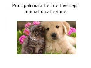 Principali malattie infettive negli animali da affezione Bordetellosi