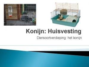 Konijn Huisvesting Diersoortverdieping het konijn Mogelijkheden Huisvesting binnen
