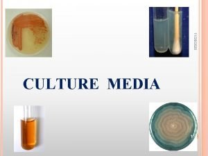 11282020 CULTURE MEDIA 1 Bacteria 11282020 have to