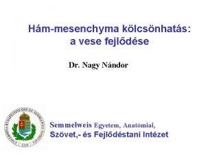 Hmmesenchyma klcsnhats a vese fejldse Dr Nagy Nndor