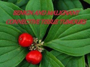 BENIGN AND MALIGNANT CONNECTIVE TISSUE TUMOURS FIBROMA MOST