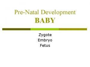 PreNatal Development BABY Zygote Embryo Fetus Prenatal Baby