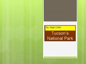 By Sage Cutler Tucsons National Park Tucson Saguaro