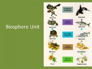 Biosphere Unit Biosphere ALL LIVING THINGS Living things