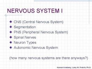NERVOUS SYSTEM I CNS Central Nervous System Segmentation