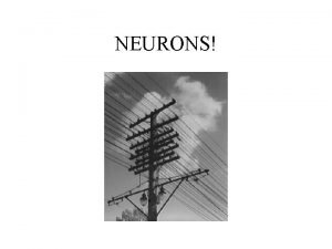 NEURONS Functions of the nervous system The functions