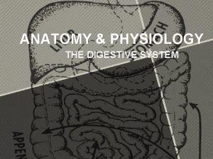 ANATOMY PHYSIOLOGY THE DIGESTIVE SYSTEM Digestive System Ingestion