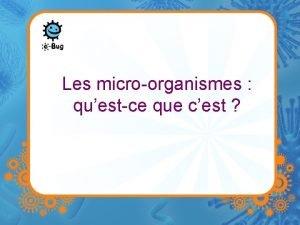 Les microorganismes questce que cest Microbes Les microbes