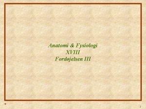 Anatomi Fysiologi XVIII Fordjelsen III 1 Anatomi Fysiologi