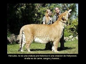 Hercules no es una criatura prehistorica ni una