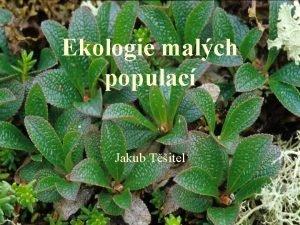 Ekologie malch populac Jakub Titel Mal populace stochastick