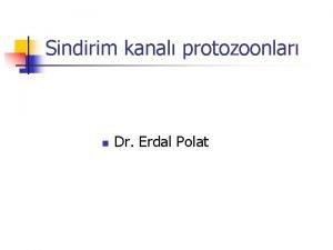 Sindirim kanal protozoonlar n Dr Erdal Polat TIBB