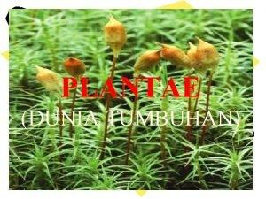 PLANTAE DUNIA TUMBUHAN Ciri Plantae Multiseluler eukariotik Memiliki