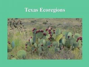 Texas Ecoregions Texas Ecoregions 1 East Texas Pineywoods