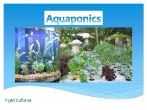 Ryan Sultana What is Aquaponics Aquaponics is the