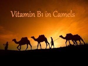 Vitamin B 1 in Camels Vitamin B 1