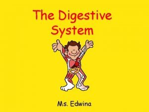 The Digestive System Ms Edwina Organs Oesophagusgullet Stomach