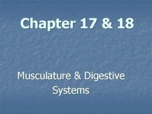 Chapter 17 18 Musculature Digestive Systems The Musculature