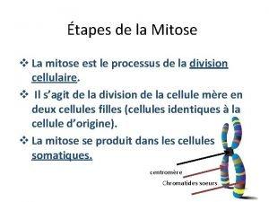 tapes de la Mitose v La mitose est